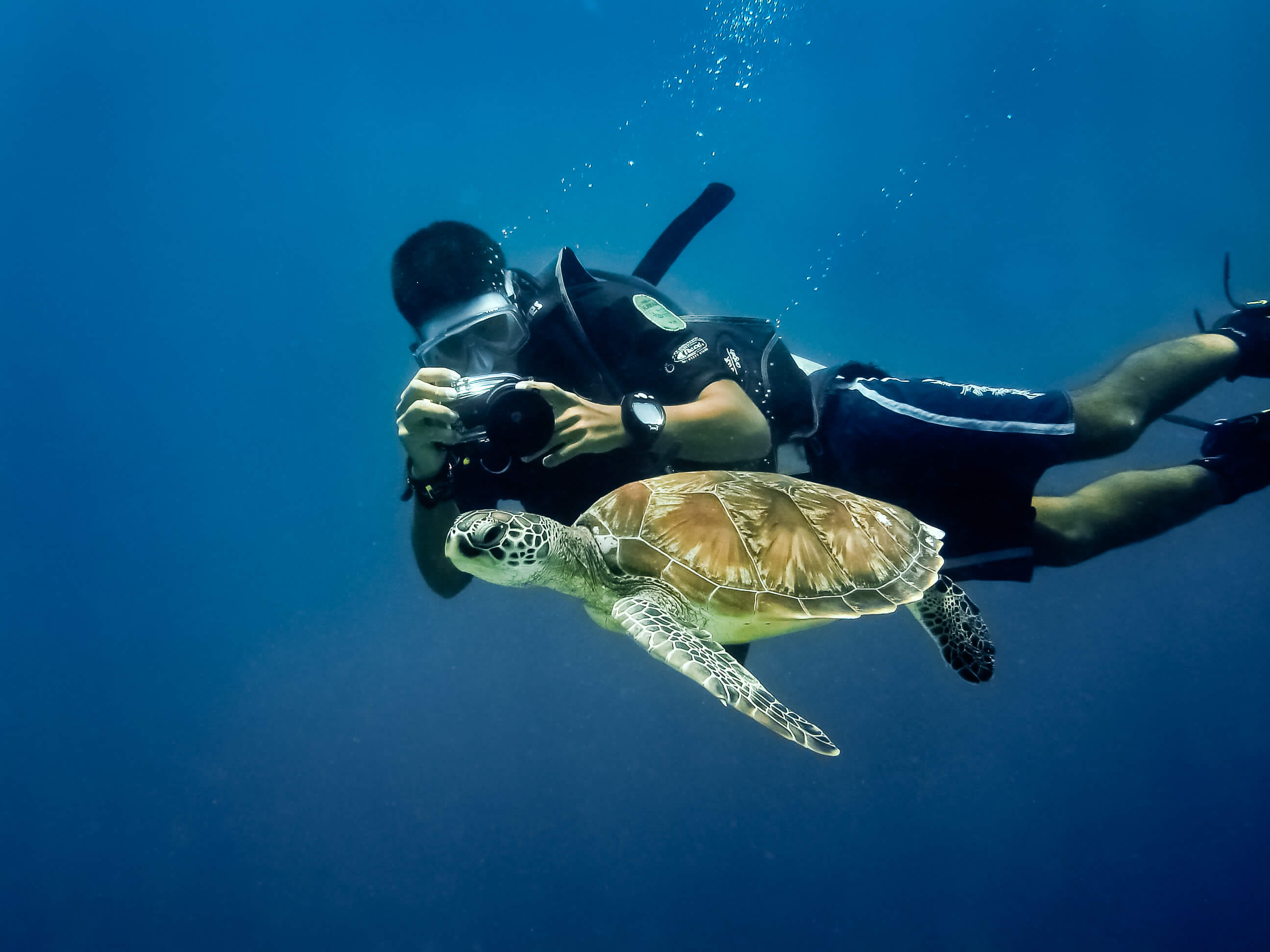 a man clicking a turtle picture under water