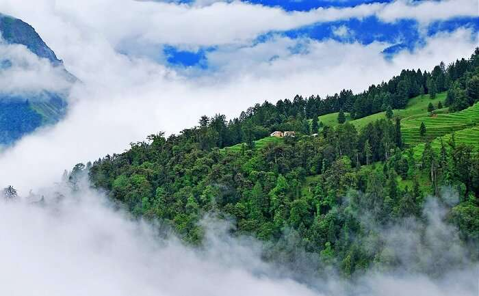 Weather Of Auli In Summer