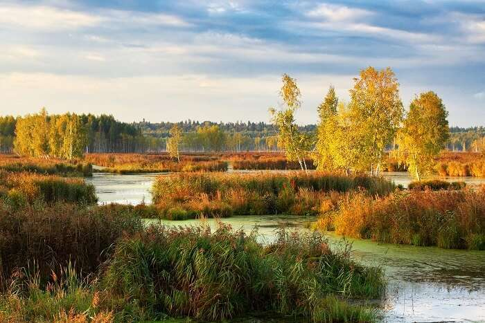 Losiny Ostrov National Park Moscow