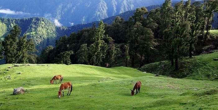 visit Chopta in uttarakhand
