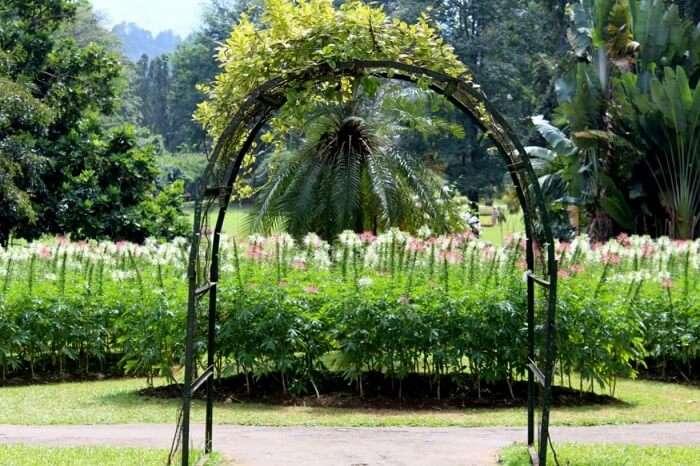 peredeniya btanical garden