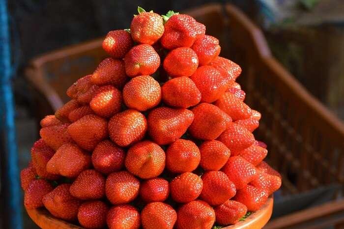 Strawberries at Mapro Garden