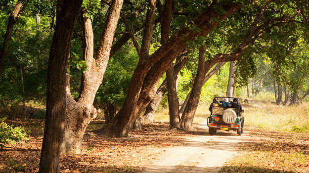 Venture out on a jeep safari in binsar wildlife sanctuary-001
