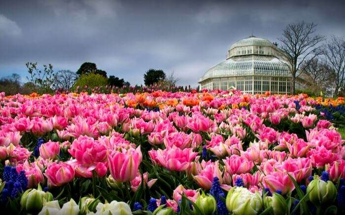 acj-2203-places-to-visit-in-dublin (7)