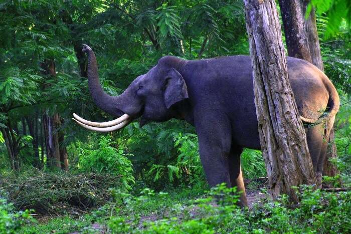 Wayanad Wildlife Sanctuary