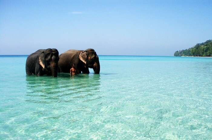 Campbell Bay National Park Andaman