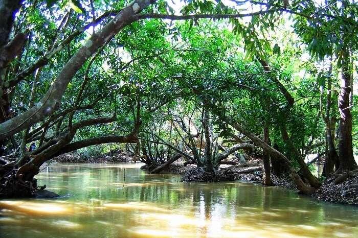 Bamboo Rafting On Kuruva Island