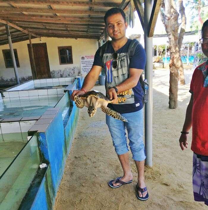 Traveler at Turtle Island
