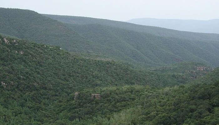 Sri Venkateswara National Park