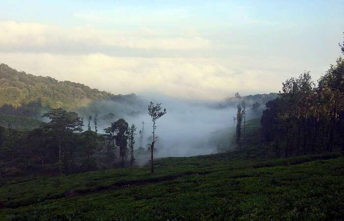 Neelimala Viewpoint in wayanad