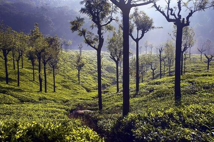 A trek to Hidden Valley Coonoor