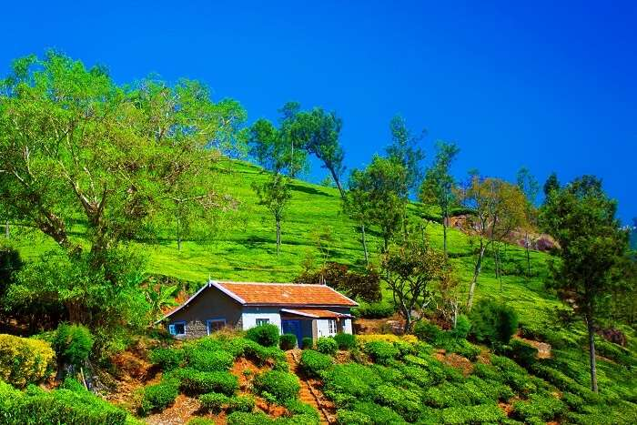 things to do in Coonoor