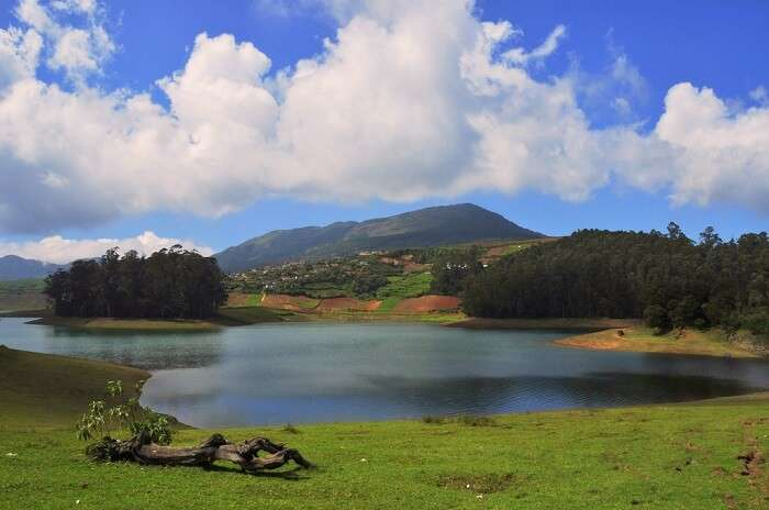 Go camping on the banks of the Avalanche Lake ooty