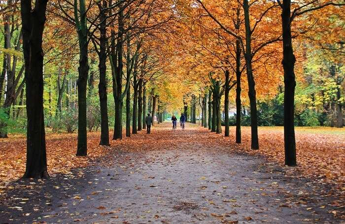 Go for a picnic at the Tiergarten park Berlin