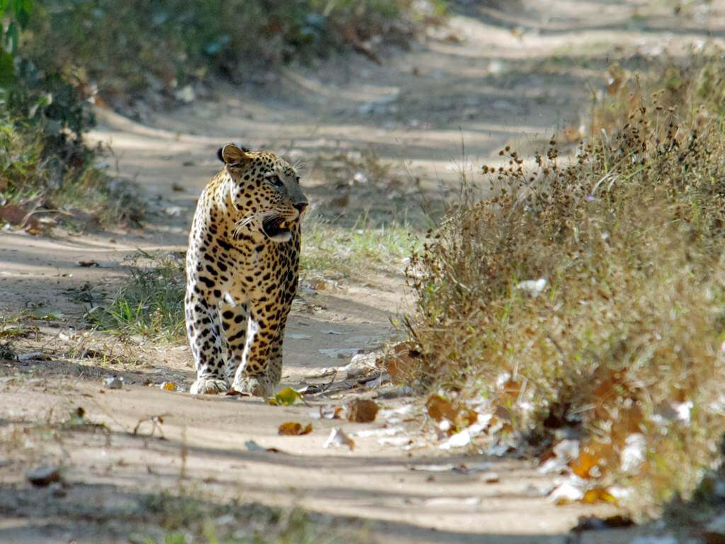 Kumbhalgarh Wildlife Sanctuary in Rajasthan