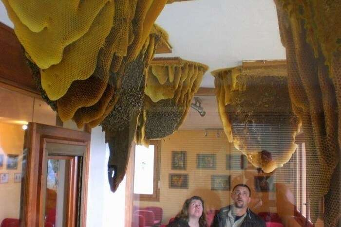 Learn to extract honey at the Honey and Bee Museum ooty