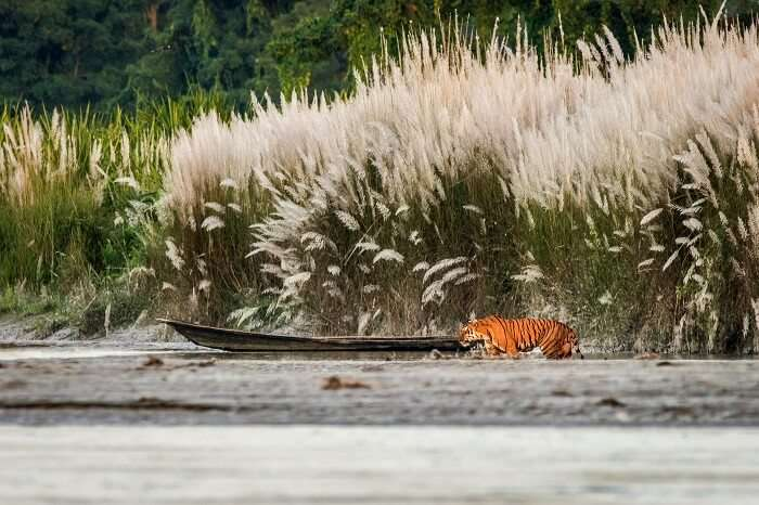 Orang National Park assam