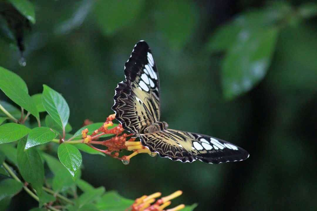 a butterfly in a national park