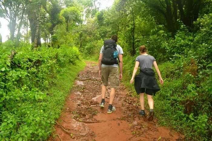 Trek through the hills and jungles coorg