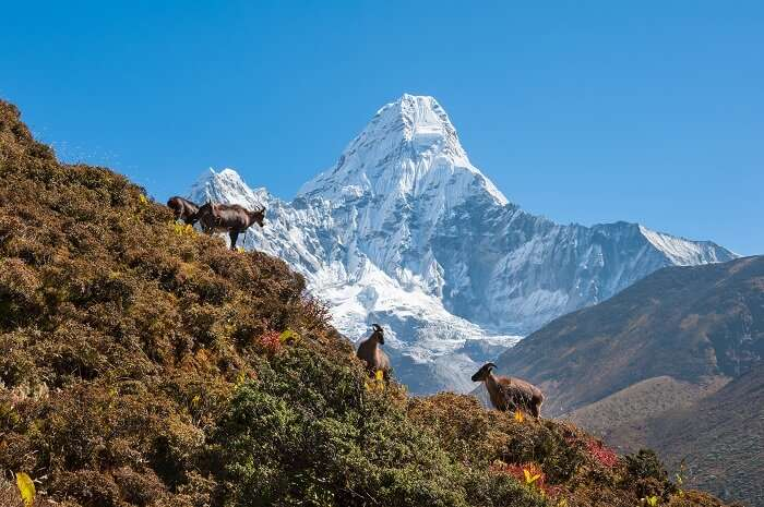 Trek to the Kanchenjunga National Park