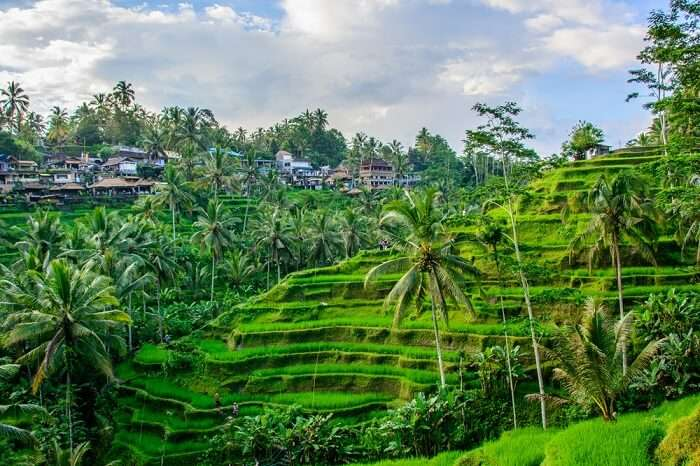 Amazing view of Ubud