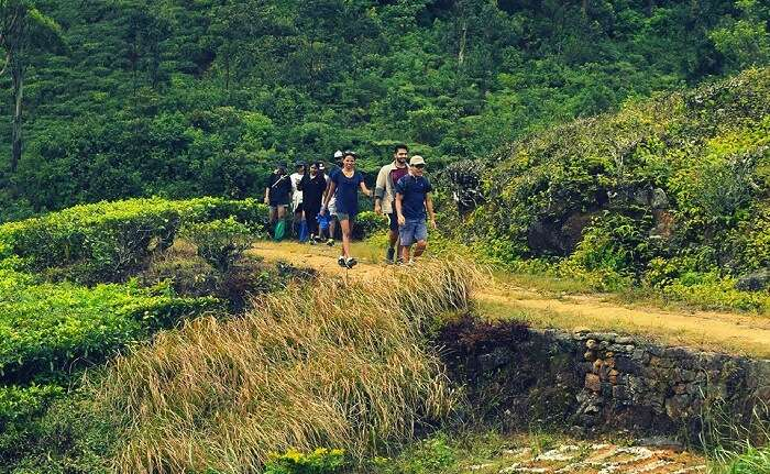 acj-trekking-in-kandy (1)