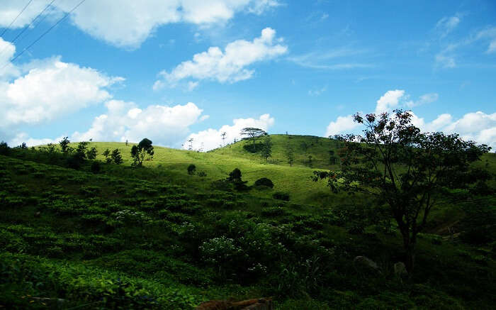 acj-trekking-in-kandy (10)