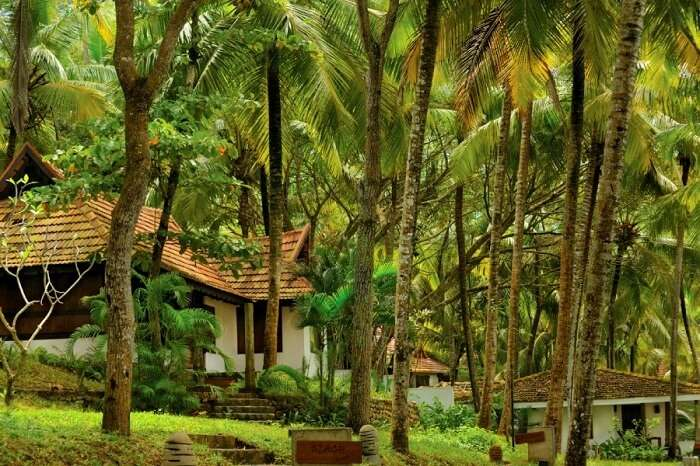 nirmaaya retreat hotel kerala