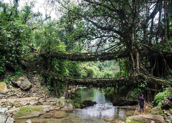 Double decker living root bridge cherrapunji