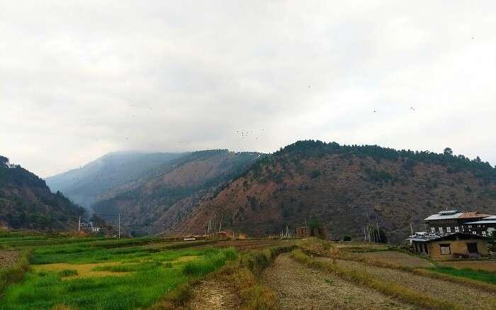 Hiking in Punakha