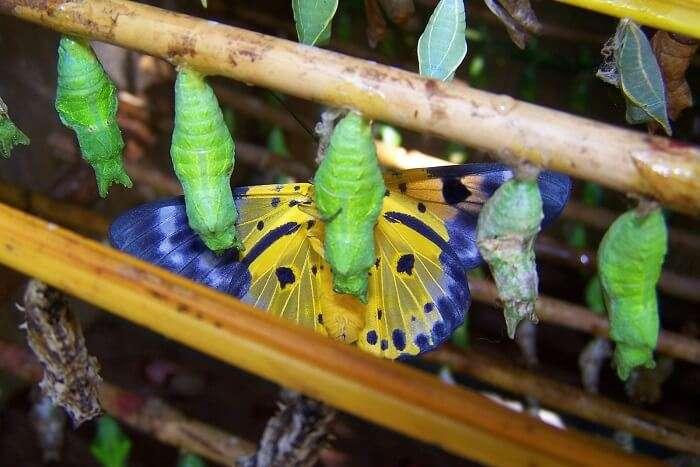 Banteay Srey Butterfly Centre siem reap