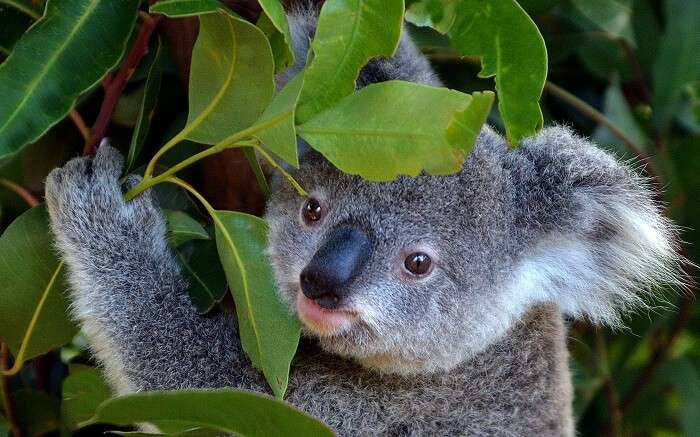 Currumbin Wildlife Sanctuary in Gold Coast ss01052017
