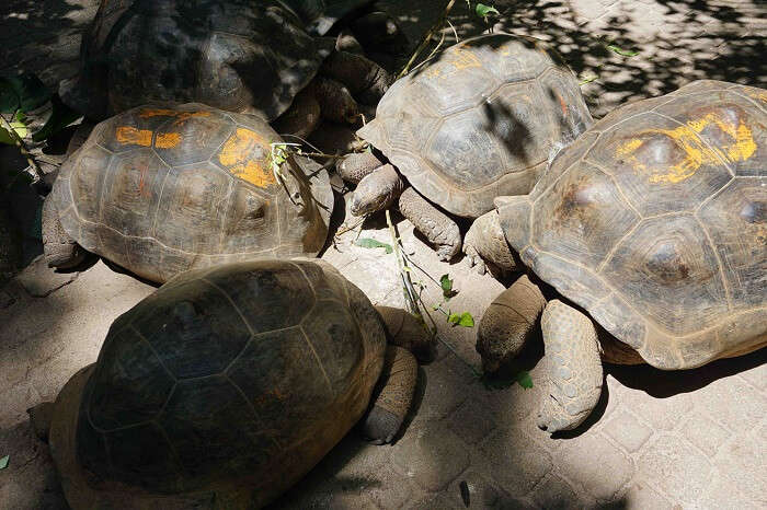 tushar seychelles honeymoon trip: tortoises island
