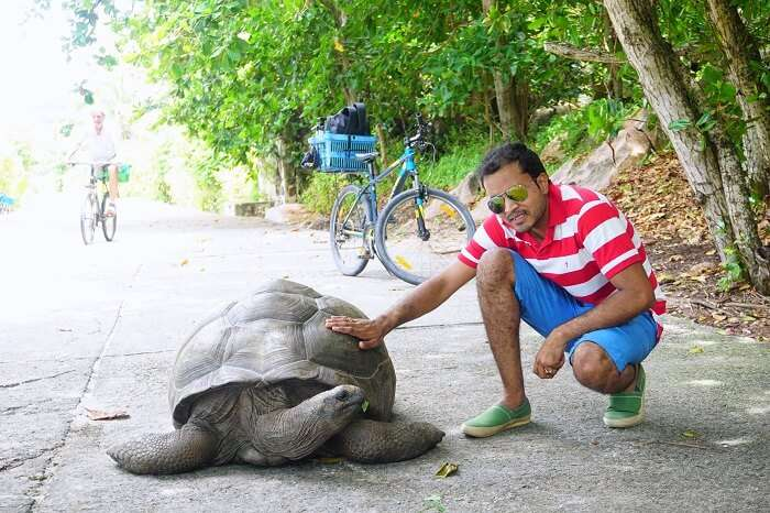 tushar seychelles honeymoon trip: clicking pics with tortoise