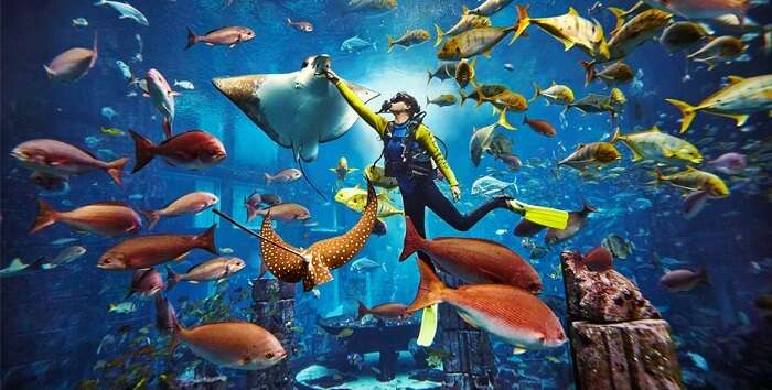 Go Deep Sea Diving At Dive Atlantis in dubai in june