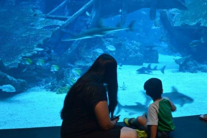 anshu singapore trip: aquarium with son