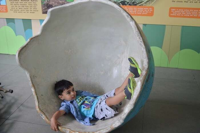 anshu singapore trip: sushant son in egg chair
