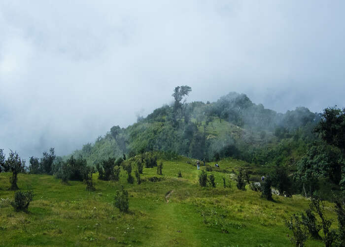 Meadows Singalila National Park
