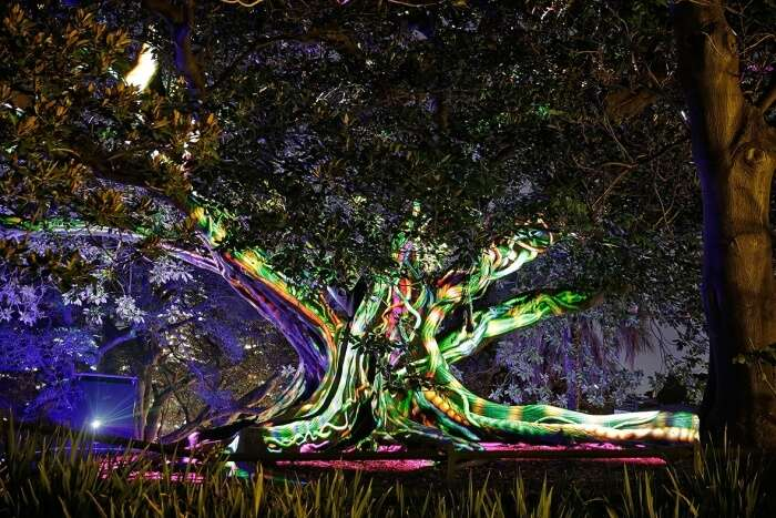 Royal Botanic Garden during Vivid Sydney