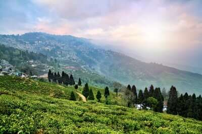 Tea estate in Assam