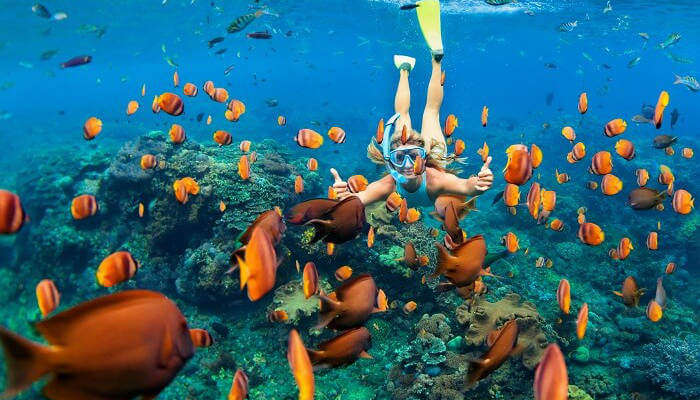 snorkeling in maldives_24th oct