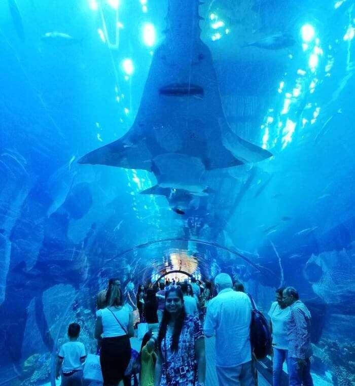 ashish singhal dubai honeymoon trip: dubai mall underwater zoo