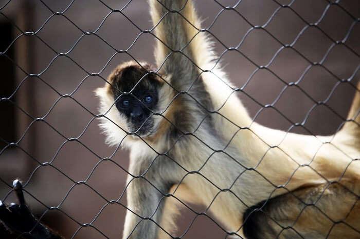 Honolulu Twilight Zoo Tours