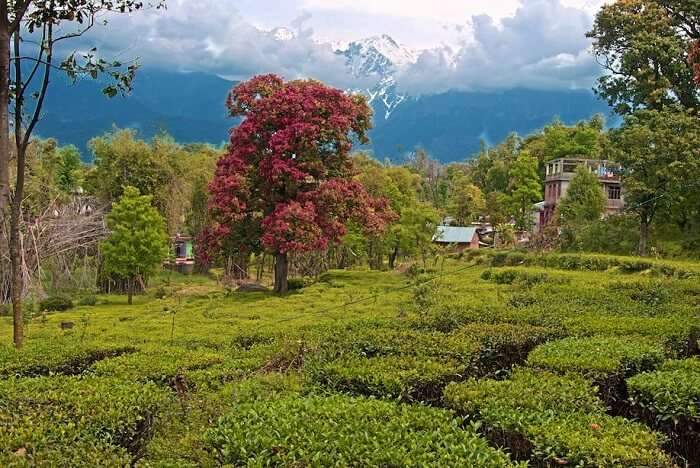 Explore the tea plantations