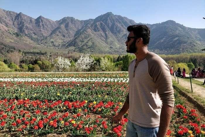 Tulip Garden View