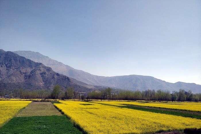Pahalgam valley
