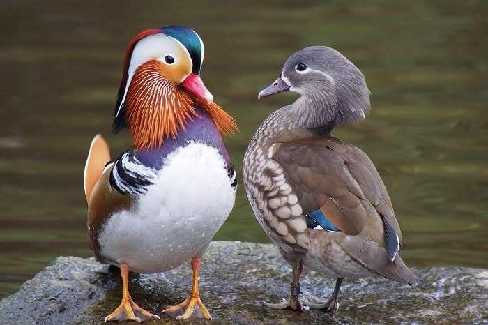 Kiwi Birdlife Park queenstown