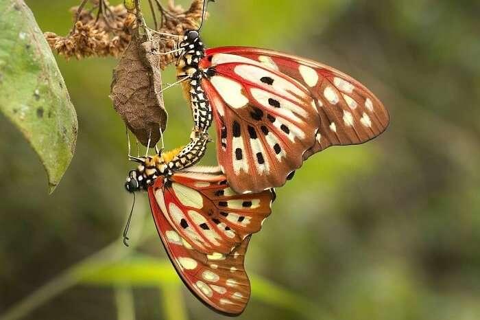 Ranomafana_National_Park