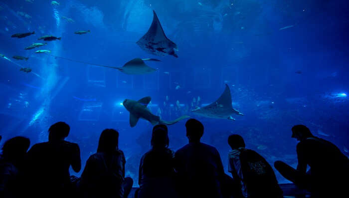 educative and amazing underwater world
