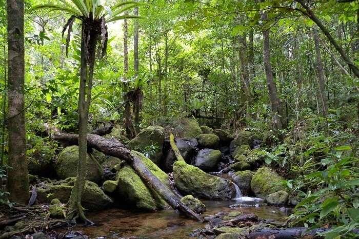 Zahamena National Park
